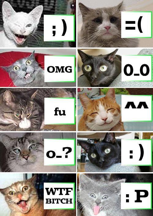 catsown