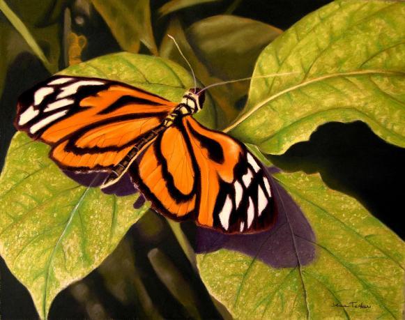 wpid-butterfly-2011-03-7-08-14.jpg