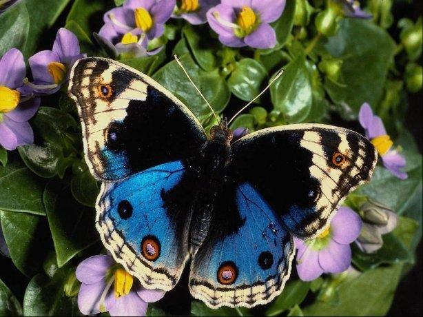 wpid-butterfly_4-2011-03-7-08-14.jpg