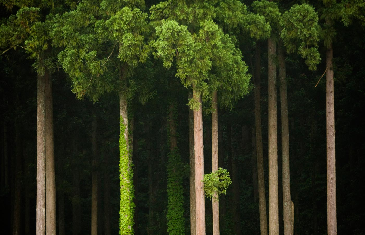 wpid-trees-by-google-2011-10-9-11-42.jpg