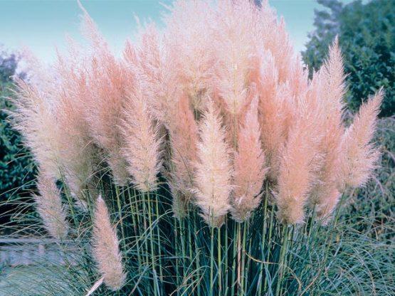 keenan evans - blush palette - green - plants