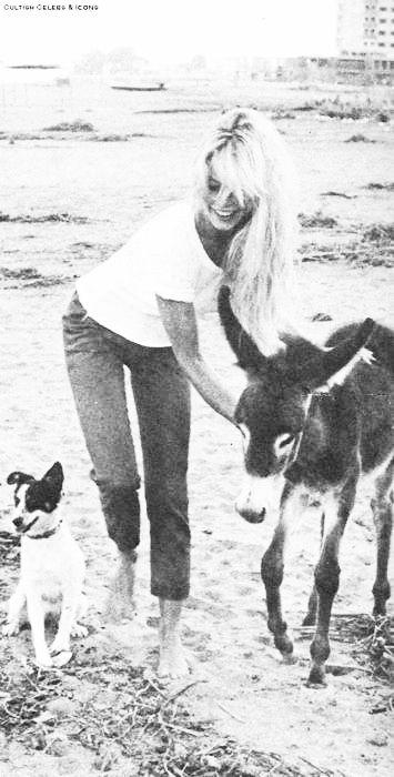 brigitte bardot - donkey - dog - animals
