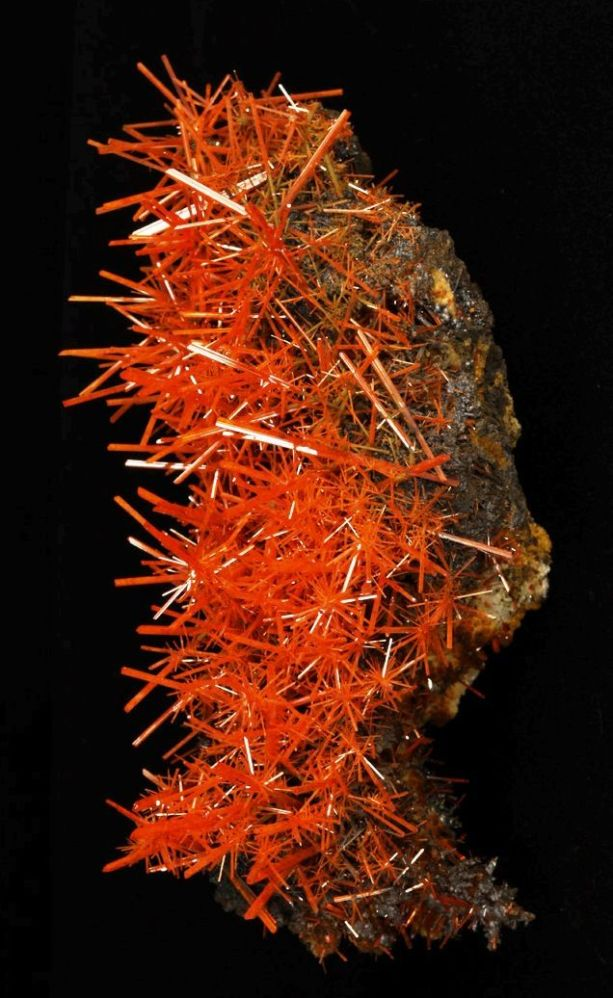 keenan evans orange coral crystal